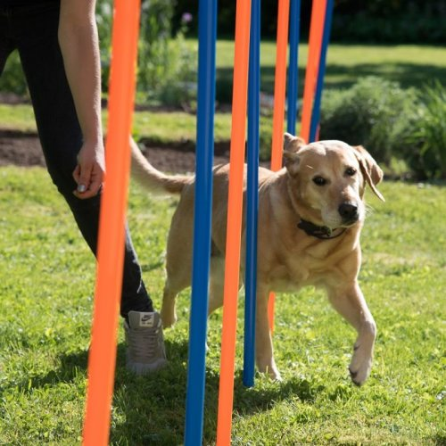 Dog Agility Weave Poles Outdoor Training Fun Play Competitions