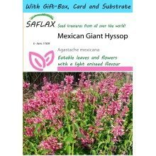 Saflax Gift Set - Mexican Giant Hyssop - Agastache Mexicana - 50 Seeds - with Gift Box, Card, Label and Potting Substrate