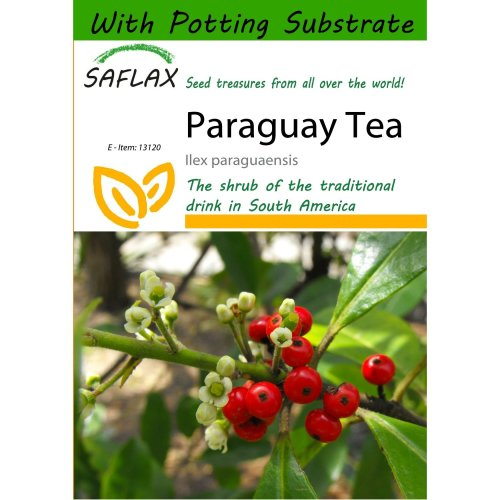 Saflax  - Paraguay Tea - Ilex Paraguaensis - 10 Seeds - with Potting Substrate for Better Cultivation