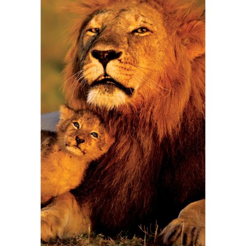 Lion and Cub Maxi Poster