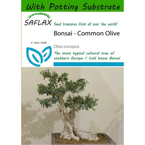 Saflax  - Bonsai - Common Olive - Olea Europea - 20 Seeds - with Potting Substrate for Better Cultivation