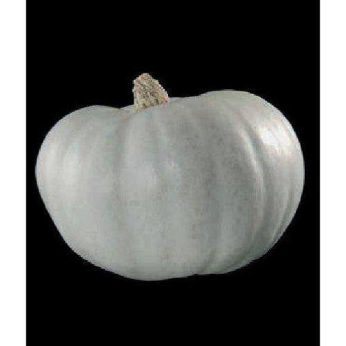 Vegetable - Winter Squash  - Crown Prince - 5 Seeds