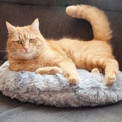 Warming Cat Cushion Reheat-able Inner Cushion
