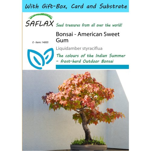 Saflax Gift Set - Bonsai - American Sweet Gum - Liquidamber Styraciflua - 100 Seeds - with Gift Box, Card, Label and Potting Substrate